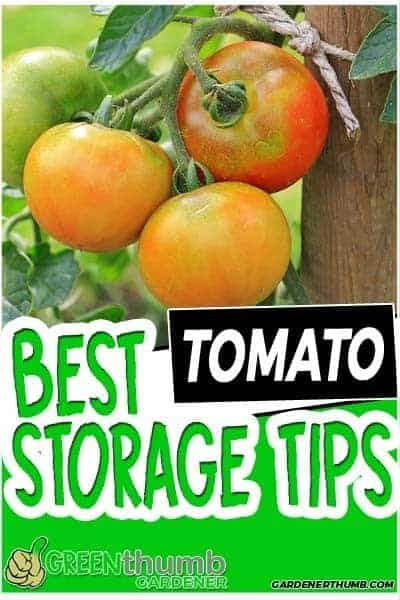 how long do tomatoes last