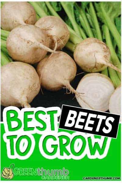 beet varieties