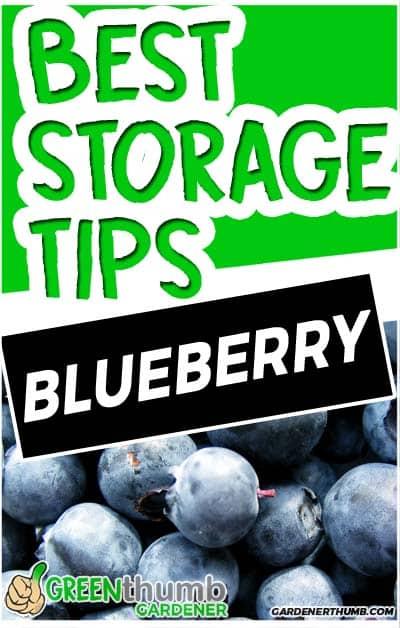 how long do blueberries last