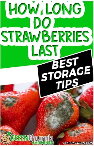 how long do strawberries last