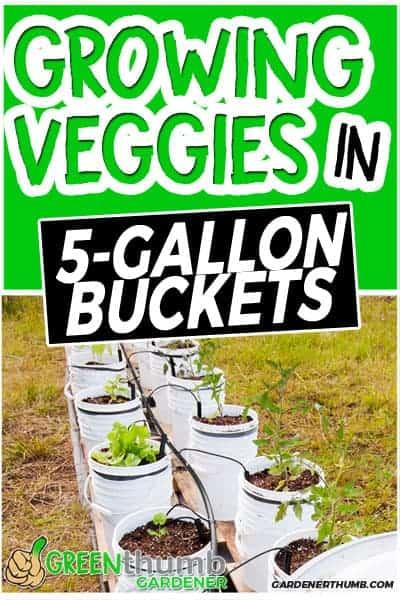 5 gallon bucket garden