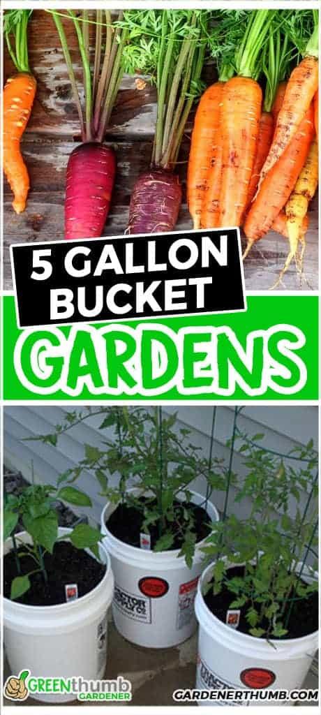 5-gallon bucket garden