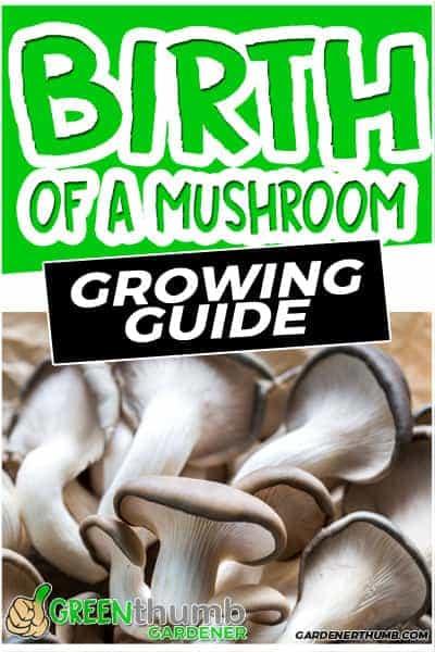 how do mushrooms reproduce