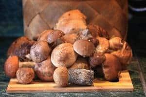 growing edible mushrooms at home