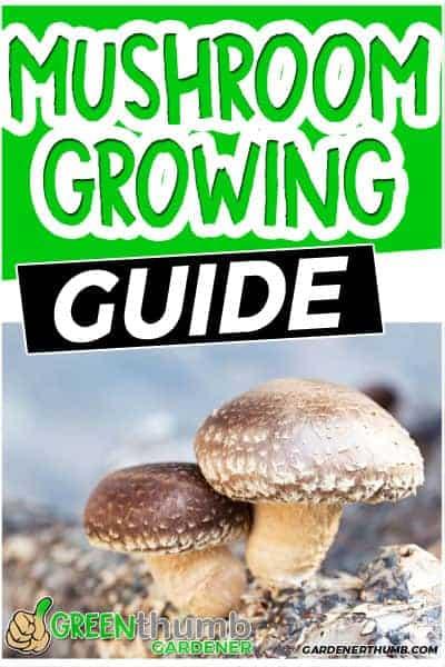 growing gourmet mushrooms at home
