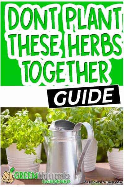 Which Herbs Do Not Go Together