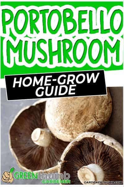 growing portobello mushrooms at home