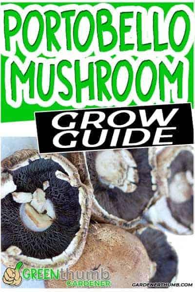 growing portobello mushrooms
