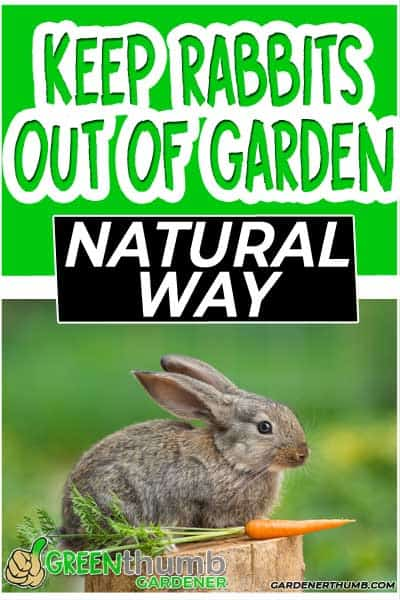 keep rabbits out of the garden