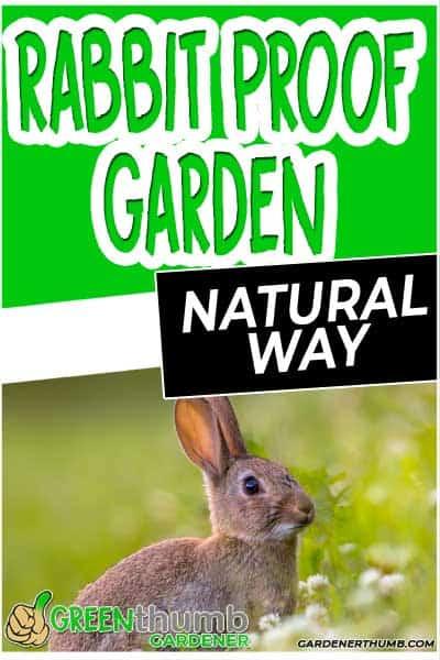 rabbits in your garden