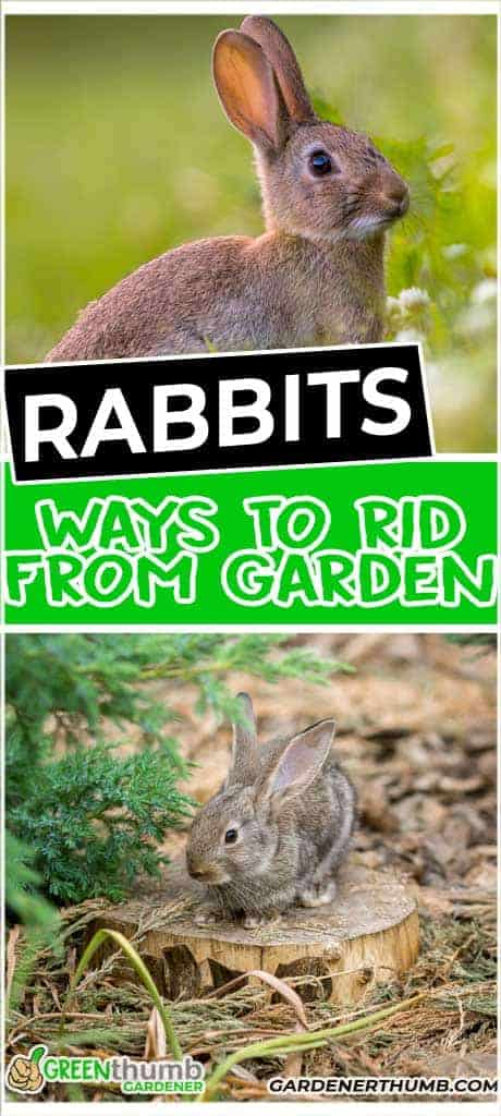 keep out rabbits from your raised beds
