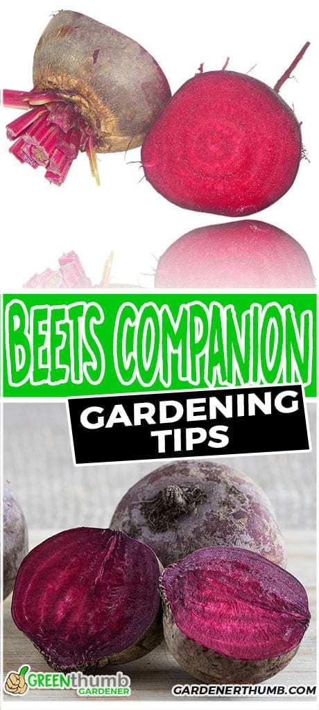 beets companion plants