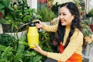 best insecticide for vegetable garden