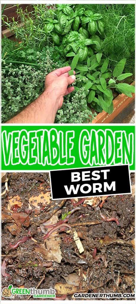 vegetable garden worms