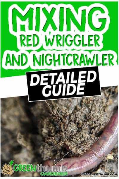red wrigglers and nightcrawlers