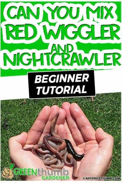 mix red wriggler and nightcrawler