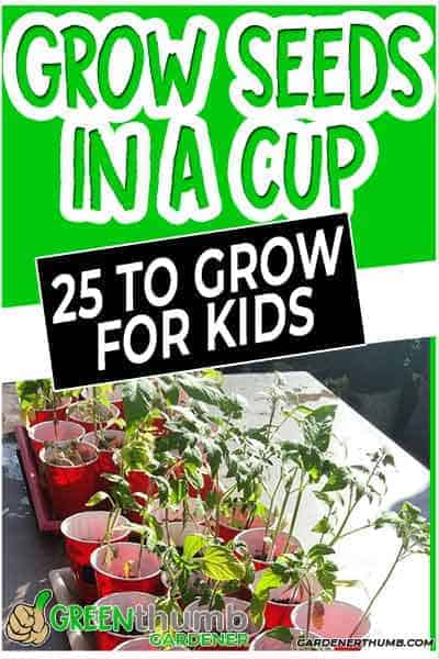 seeds to grow in a cup