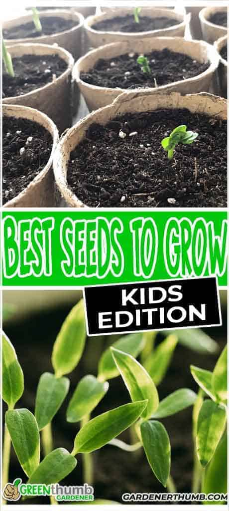 grow seeds in a cup