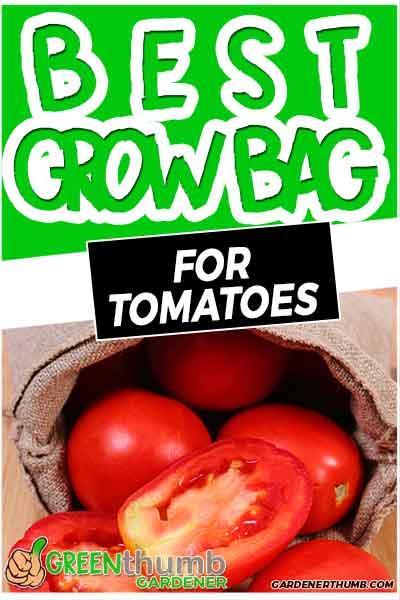 grow bag for tomatoes