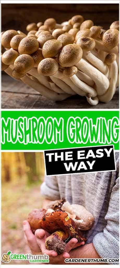 grow mushroom without a kit