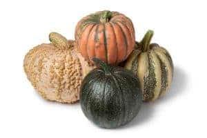 growing pumpkins in a raised beds