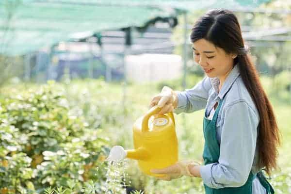 how often to water raised vegetable garden