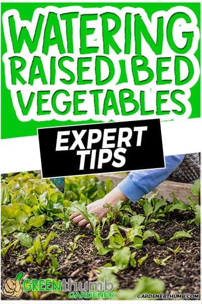 water raised bed vegetables