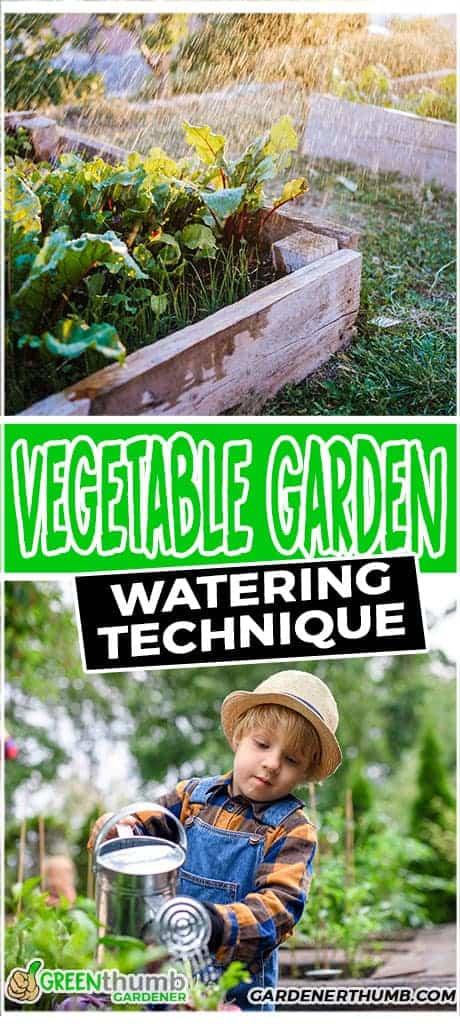 water vegetable garden in raised beds