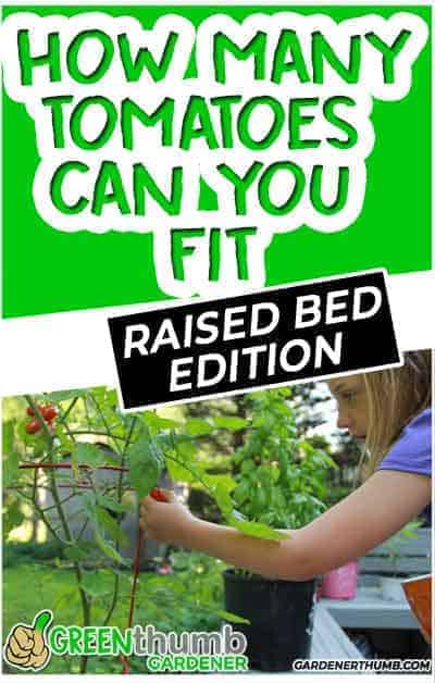 raised bed tomato plants