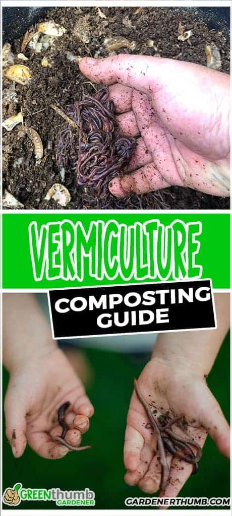 vermicomposting tips