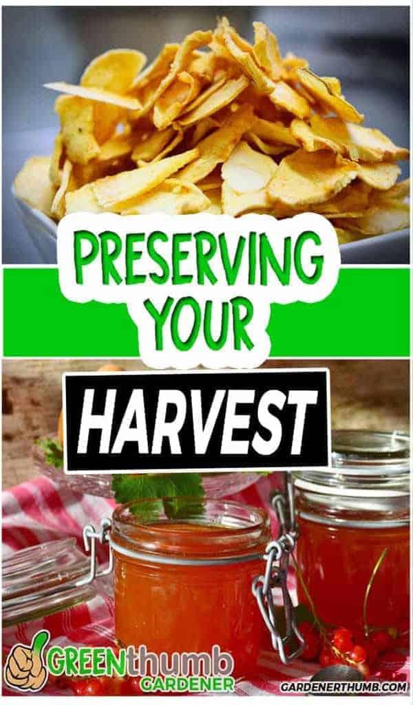 ways of preserving food