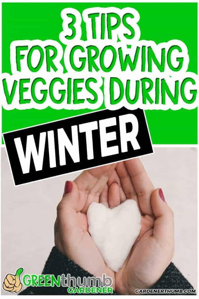 winter gardening
