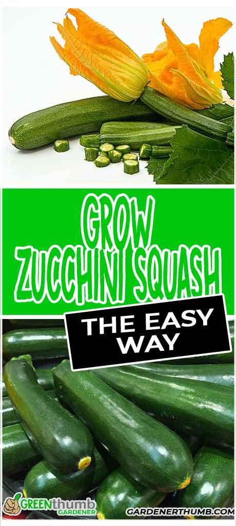 zucchini squash plants
