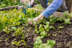 best vegetable to grow in raised bed technique