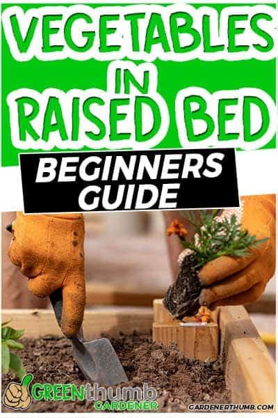 grow vegetable in raised bed