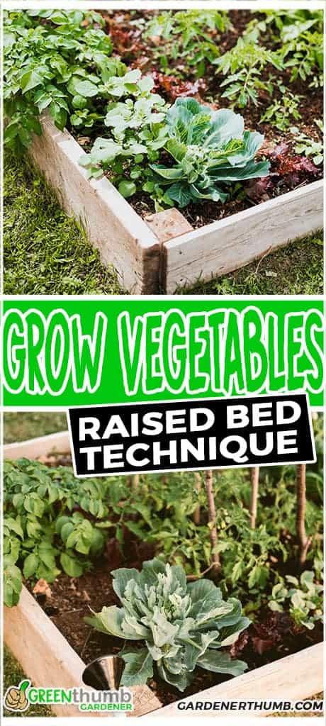 best vegetable to grow in raised bed