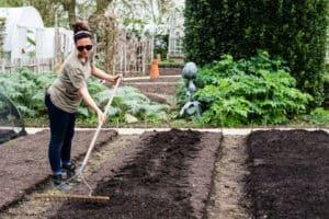 how to prepare soil for planting vegetable