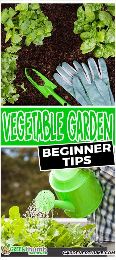vegetable garden for beginner tips