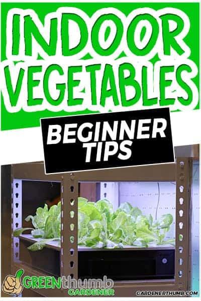 vegetable indoor