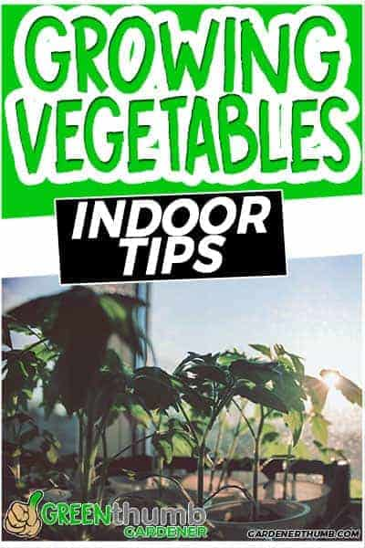 vegetable garden indoor
