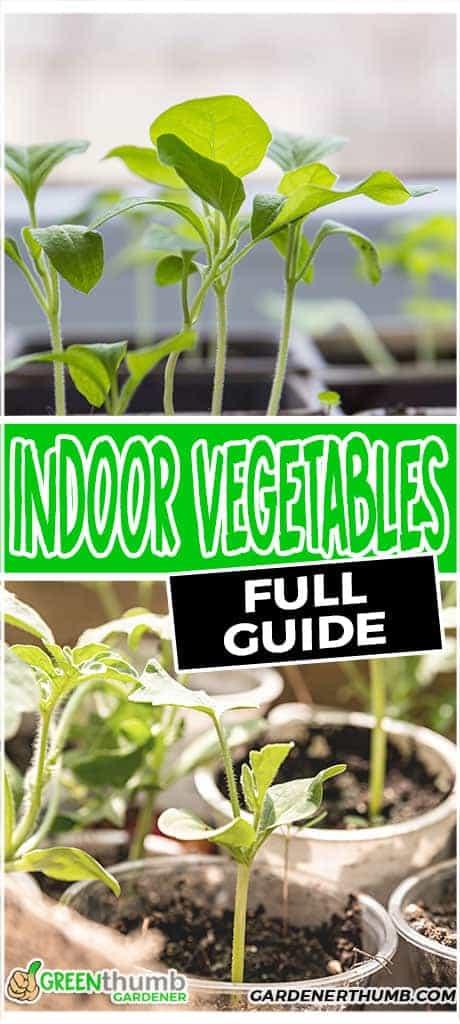 vegetable garden to grow inside