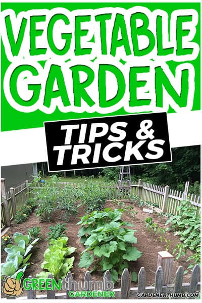 vegetable garden tips & tricks