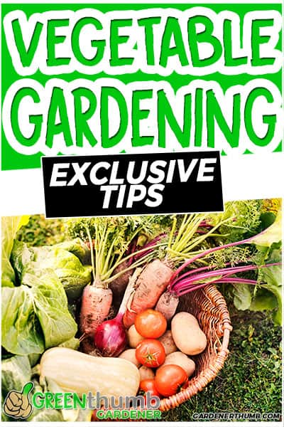 vegetable gardening tips and tricks