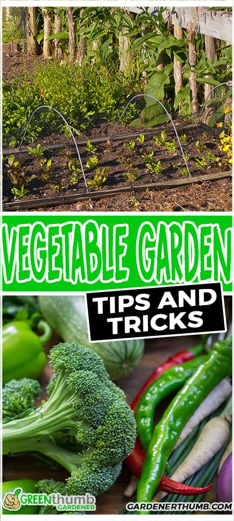 vegetable garden tips and tricks