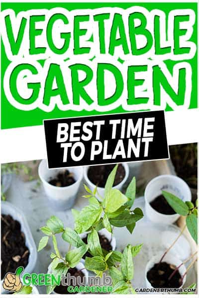 vegetable garden best time to plant