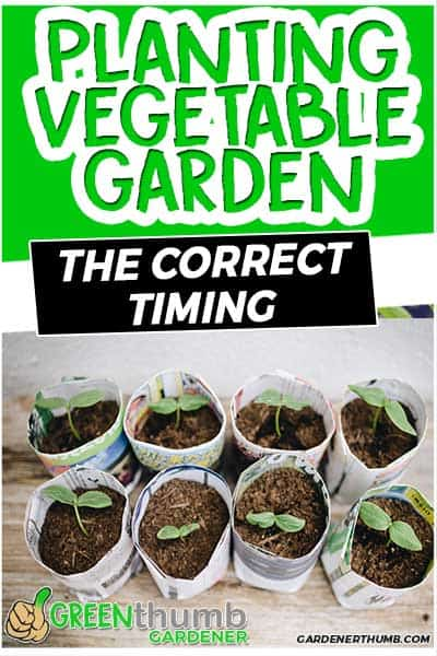 planting vegetable garden the correct timing