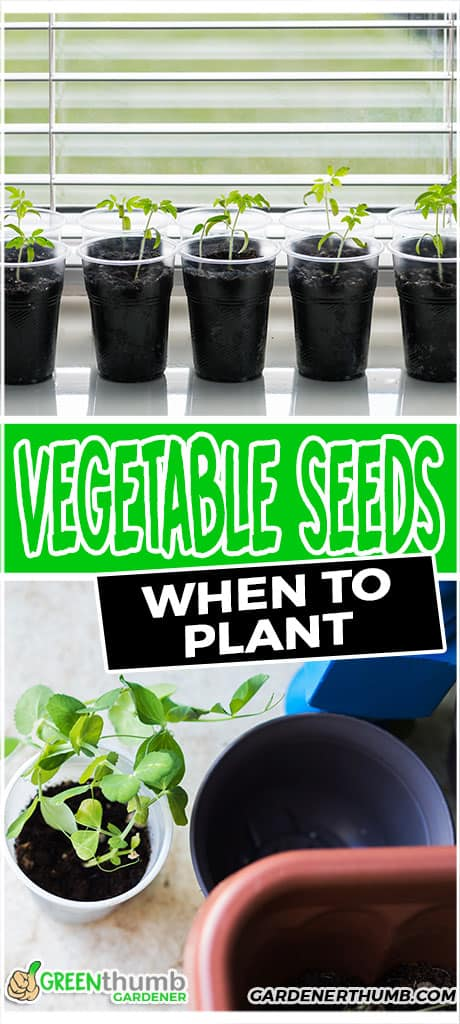 vegetable seeds when to plant