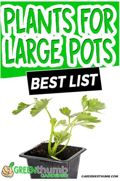 plants for large pots best list