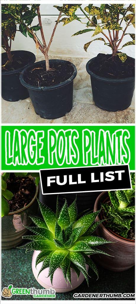 large pots plants full list