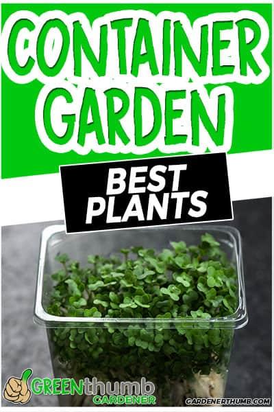 container garden best plants
